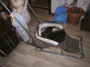 ребенок катает кота