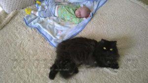 малыш и кот спят